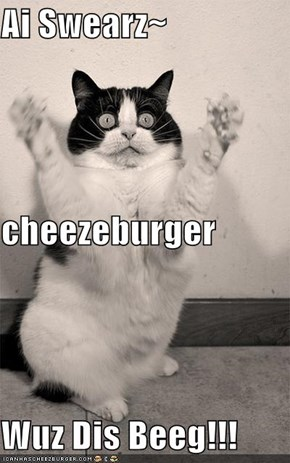 Ai Swearz~ cheezeburger Wuz Dis Beeg!!!