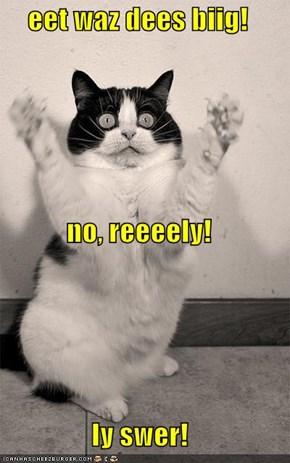 eet waz dees biig! no, reeeely! Iy swer!