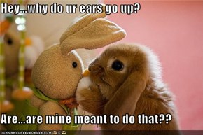 Hey...why do ur ears go up?  Are...are mine meant to do that??