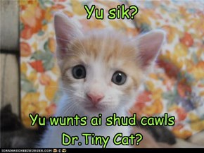 Yu wurry kitteh!