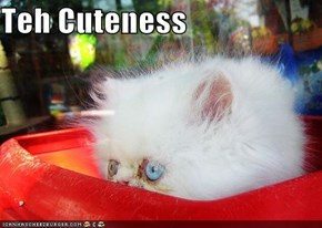 Teh Cuteness