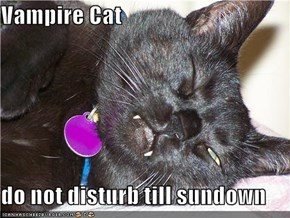 Vampire Cat  do not disturb till sundown
