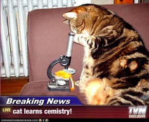 Breaking News - cat learns cemistry!