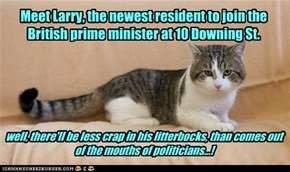 Larry the, Downing St. cat!!