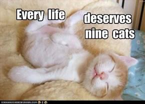 Adopt a cat....