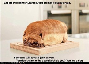 Get off the counter loafdog, you are not actually bread.