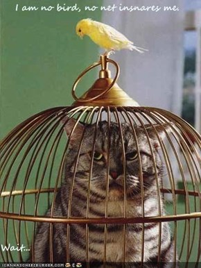 I am no bird, no net insnares me.  Wait...