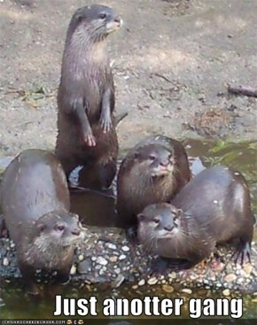 Just anotter gang