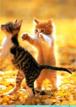 I'm Gonna Get You!