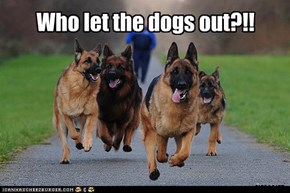 Who let the dogs out?!!