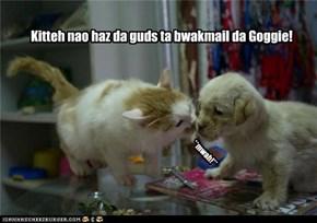 Kitteh nao haz da guds ta bwakmail da Goggie!