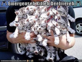 /*\ Emergenseh Kitteh Deelivereh /*\