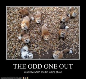 THE ODD ONE OUT