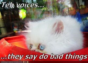 Teh voices...  ...they say do bad things
