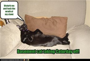 Basement cat taking Caturday off!