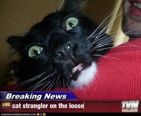 Breaking News - cat strangler on the loose