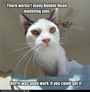 Bobble Head Kitteh