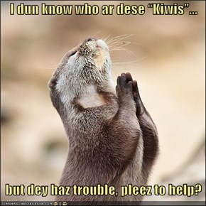 "I dun know who ar dese ""Kiwis""...      but dey haz trouble, pleez to help?"