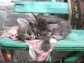 Cyoot Kittehs of teh Day: Aftur Piknik in teh Park, Iz Tym 4 Nap on teh Bench