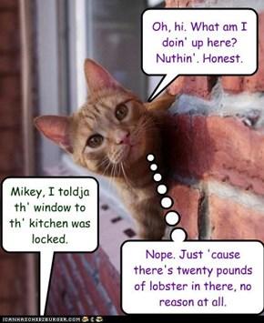 Mikey, the Cat-Burglar