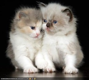 Cyoot Kittehs of teh Day: Fraternal Twinz