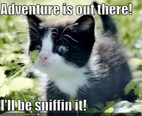 Adventure is out there!  I'll be sniffin it!