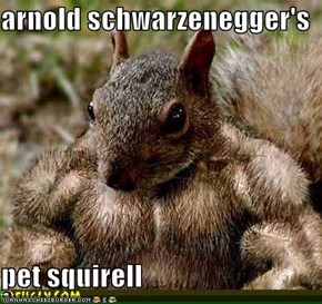 arnold schwarzenegger's  pet squirell