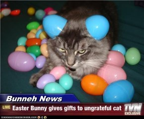 Bunneh News - Easter Bunny gives gifts to ungrateful cat