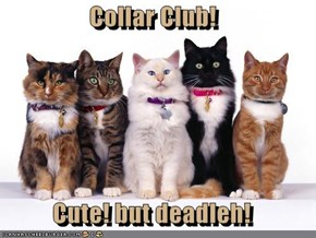 Collar Club!  Cute! but deadleh!