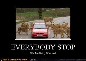EVERYBODY STOP