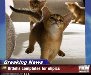 Breaking News - Kittehs comptetes for olipics