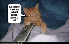 k, u can hav it bak, but only till animal planet iz on!