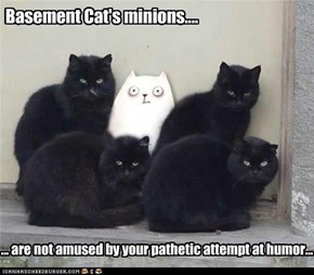 Basement Cat's minions....