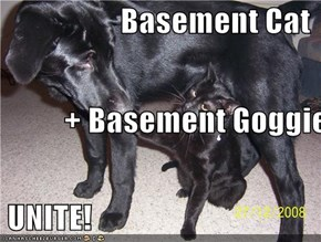 Basement Cat           + Basement Goggie  UNITE!
