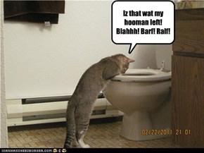 Iz that wat my hooman left! Blahhh! Barf! Ralf!