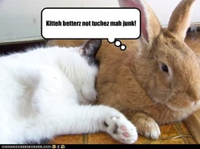 Kitteh betterz not tuchez mah junk!