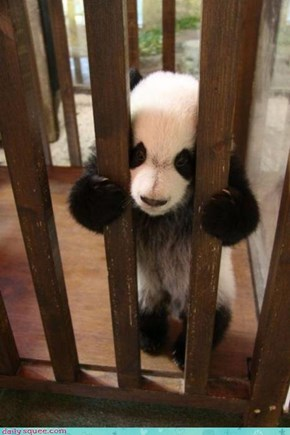 Acting Like Animals: Doin' Time for Bamboo Trafficking