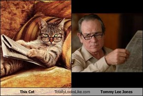 This Cat Totally Looks Like Tommy Lee Jones