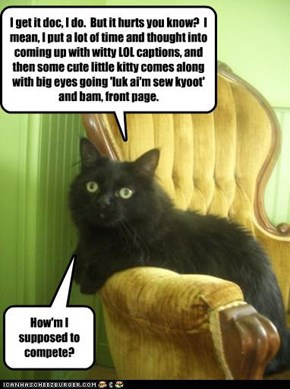 Cats in therapy: kyoot envy