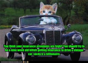 You think your insurance premiums are high? You should try to be a nine week old kitteh getting insurance to drive a vintage car. Lucky Iz a billionaire.