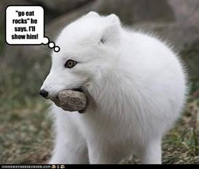 """""""go eat rocks"""" he says. I'll show him!"""
