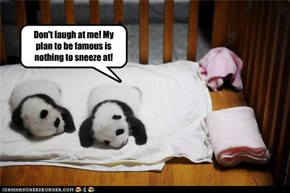 """Sneezing Baby Panda"" before he was famous."