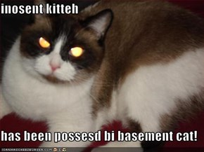 inosent kitteh  has been possesd bi basement cat!