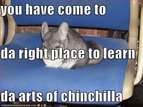 you have come to  da right place to learn da arts of chinchilla
