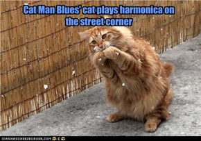 Cat Man Blues' cat plays harmonica on  the street corner