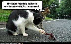 The harder you hit the catnip, the  wierder the friends that come around...