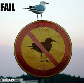 Bird Sign Fail