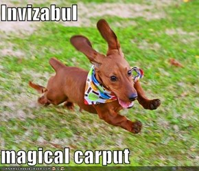 Invizabul  magical carput