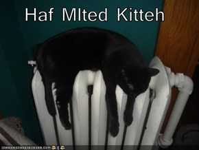 Haf Mlted Kitteh