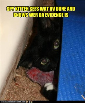 SPY KITTEH SEES WAT UV DONE AND KNOWS WER DA EVIDENCE IS